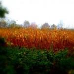 Autumn Equinox Sabbat